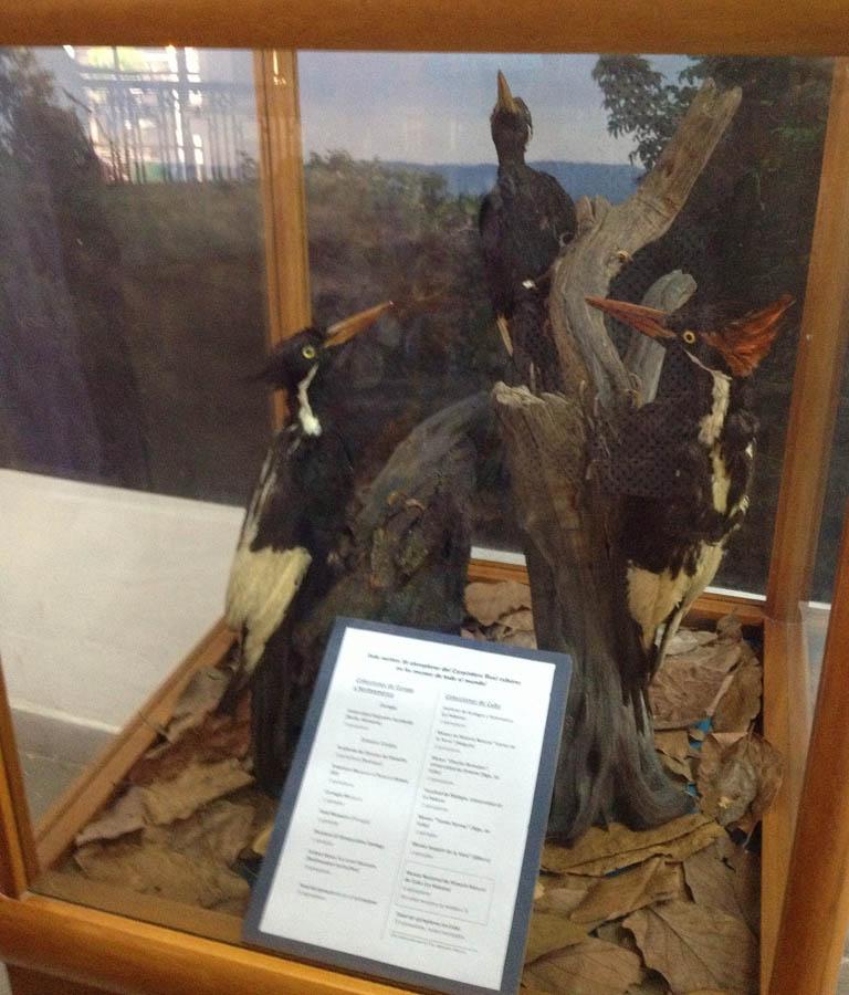 Santa Maria Natural History Museum