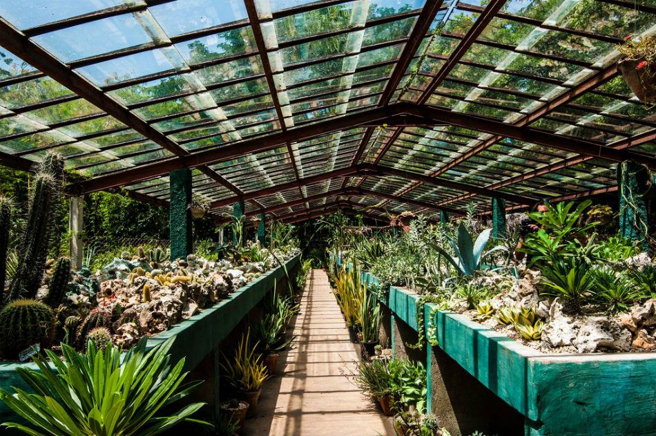 Jard n bot nico de cupaynic bayamo for Plantas de un jardin botanico