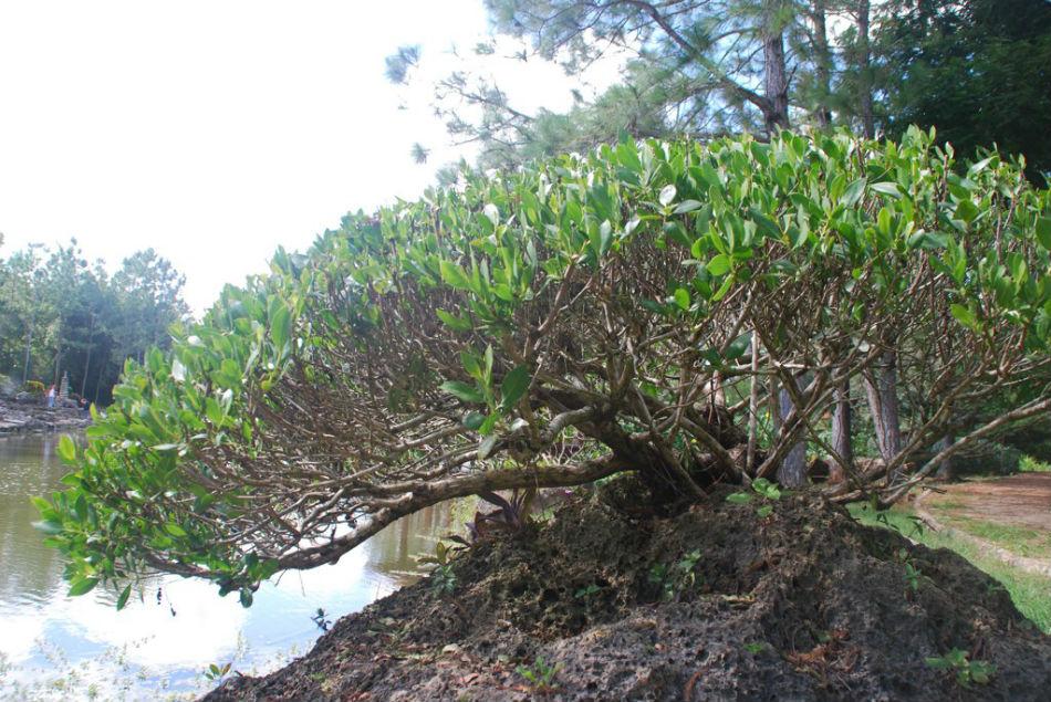 Jard n bot nico nacional de cuba for Jardin botanico nacional