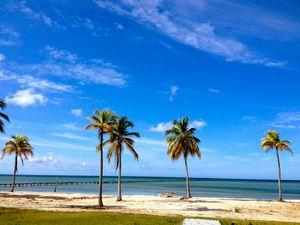 Cocodrilo, Isla de la Juventud