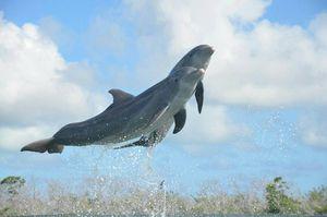 Delfinario de Cayo Coco, Cuba