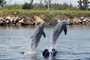 Acquario dei Delfini