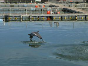 Varadero Dolphinarium