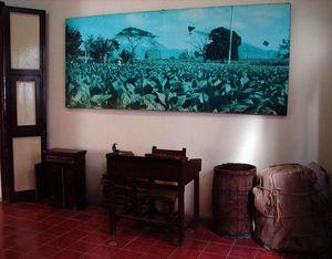 Museo del Tabacco, Avana