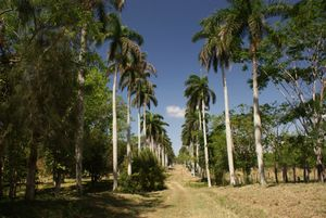 Giardino Botanico di Cienfuegos