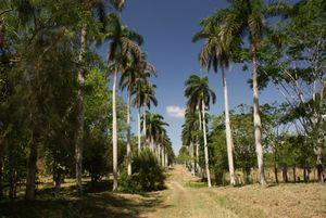 Cienfuegos Botanical Garden