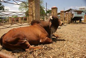 El Bosque Zoological Garden (Camilo Cienfuegos)